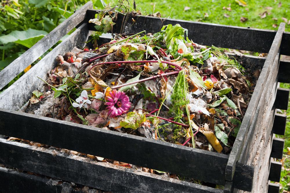 Compostiera e compost